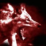人狼の基礎